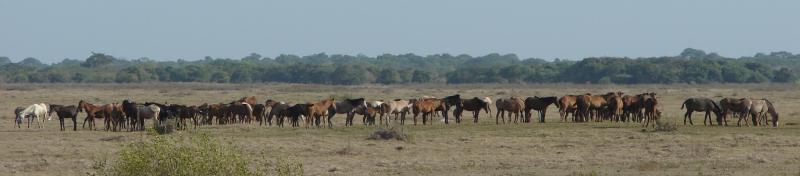 Criollo Venezolano 2011 - Los Camorucos, Los Llanos de Apure