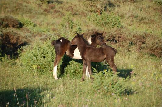 Foals groom each other