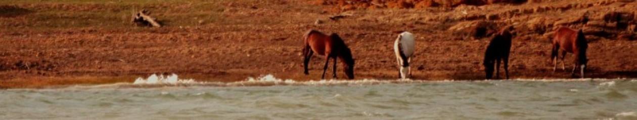 Wild Equus – Equilibre