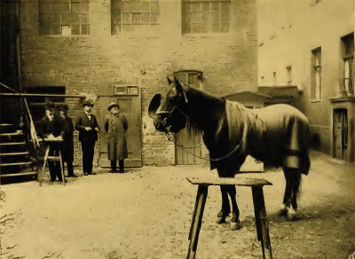 Hans the wonderhorse