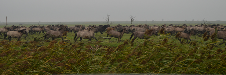 konik on the move