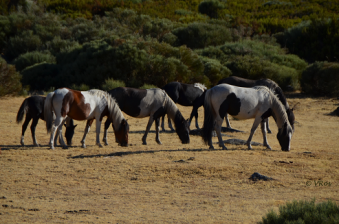Synchronized grazing - Ibai and band