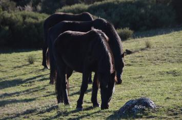 Synchronized grazing