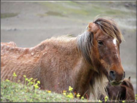 caballos paramo2