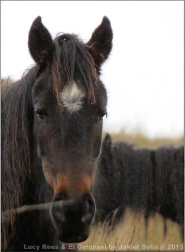 caballos paramo3