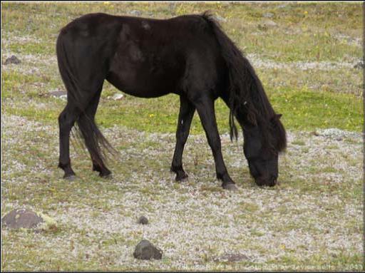 caballos paramo5