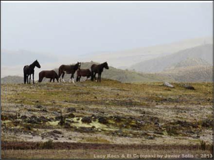 caballos paramo7