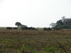 A herd of horses in Los Llanos huddled together in distinct bands. Photo by: Victor Ros Please respect © Copyright!