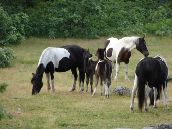 Foal play2