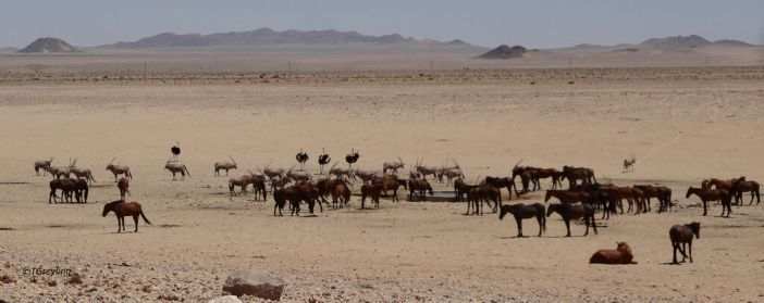 namibia WE1